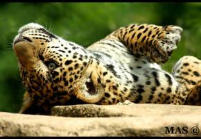 Jaguar Cub_2293 by MASOCHO