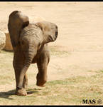 Baby African Elephant_1310 by MASOCHO
