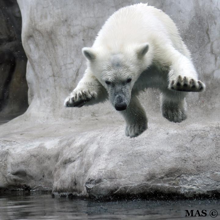 Little Jump by MASOCHO
