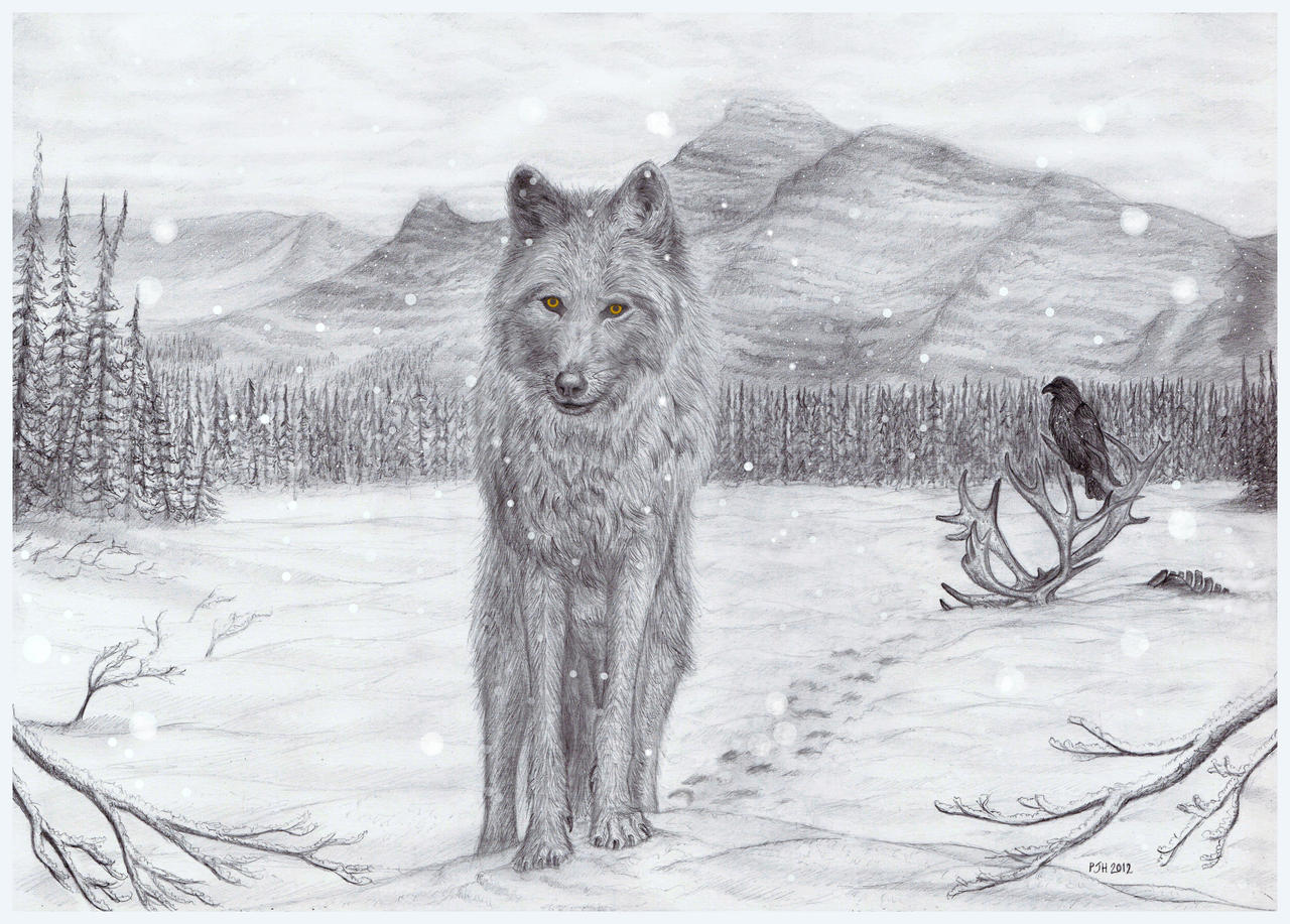 Lone Wolf By Philipharvey Lone Wolf By Philipharvey