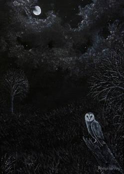 Midnight Barn Owl
