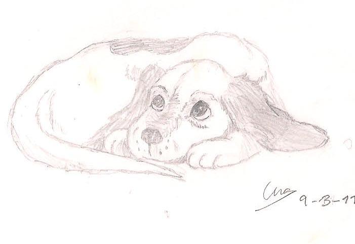 Rinconcito (¡Ey...!) - Página 2 Perros_by_eilaka-d477nwo