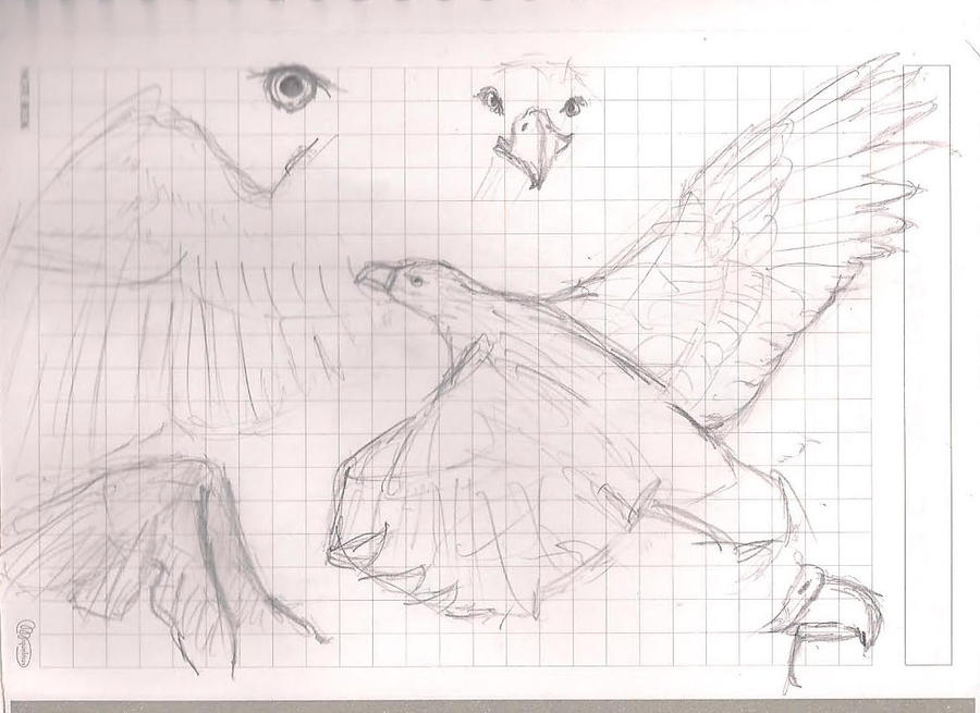 Rinconcito (¡Ey...!) - Página 3 Eagles_by_eilaka-d47c65i