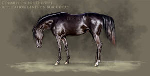 Commission - Black by HocusPlotus