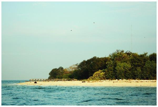 Hasil gambar untuk pulau rambut adalah salah satu pulau di kepulauan seribu yang terkenal dengan fauna