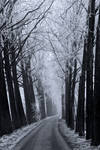 snowy road by camabs