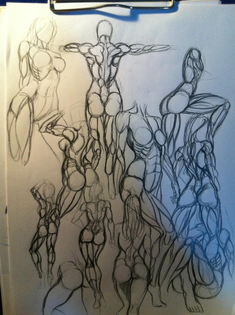 female anatomy studies by Zamberz on DeviantArt
