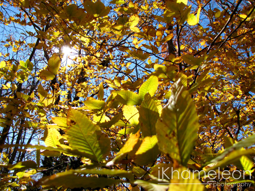 Golden Autumn Leaves in the Sky by kmlkreations