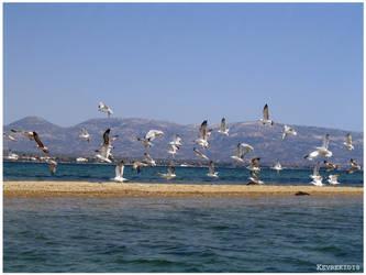Aegean Seagulls by Kevrekidis