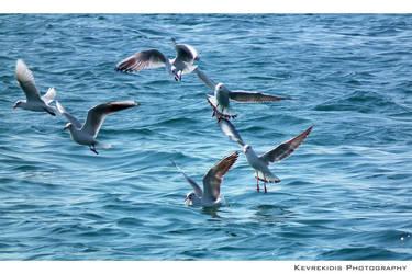 Aves Marinas by Kevrekidis
