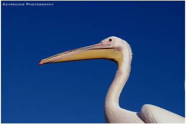 Pelican by Kevrekidis