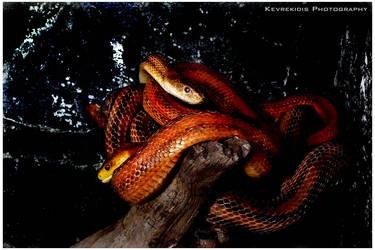 Serpent by Kevrekidis