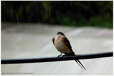 Introducing the Rain by Kevrekidis