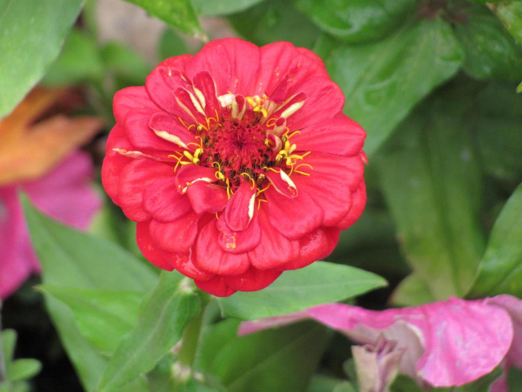 Flower 2 by pipomonkeys