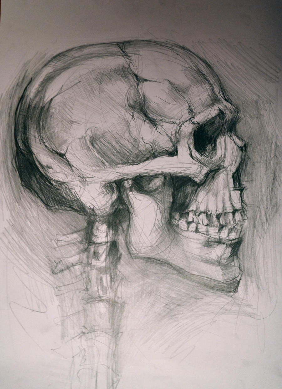This is a picture of Irresistible Skull Profile Drawing