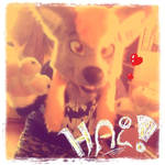 Webcam-toy-foto2