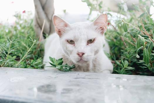 Lovely Stray Cat of Dubai