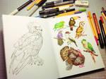 Birds sketching