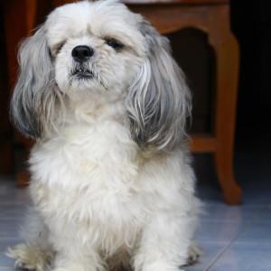 martincoolwine's Profile Picture