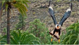 Bird by baarisa