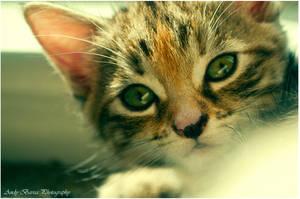 kitty by baarisa