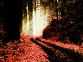 Crimson Forest by Miziyaki