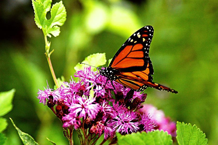 Beautiful Butterflies Pictures Re: beautiful butterflies