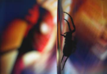 Spider which loves Spiderman