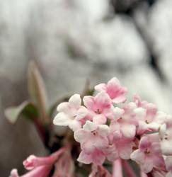 my little pink heart by Julietsound