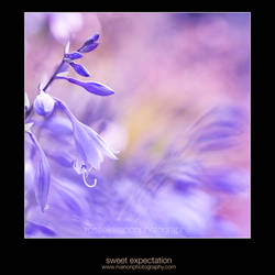 sweet expectation by Julietsound
