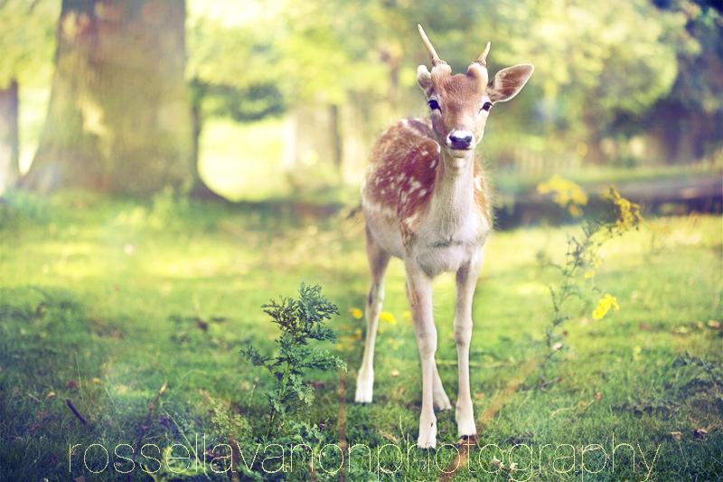 Bambi by Julietsound