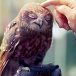 owlove