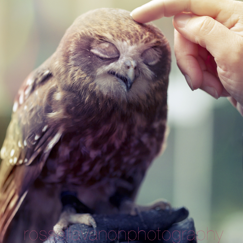 owlove by Julietsound