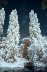 IR Trees by bmh1