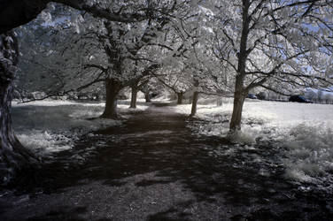 Boxmoor path in infrared by bmh1
