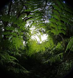 Ferns at Ashridge by bmh1