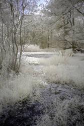 Ashridge pond in infrared by bmh1