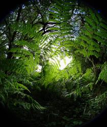 Ferns at Ashridge 2 by bmh1