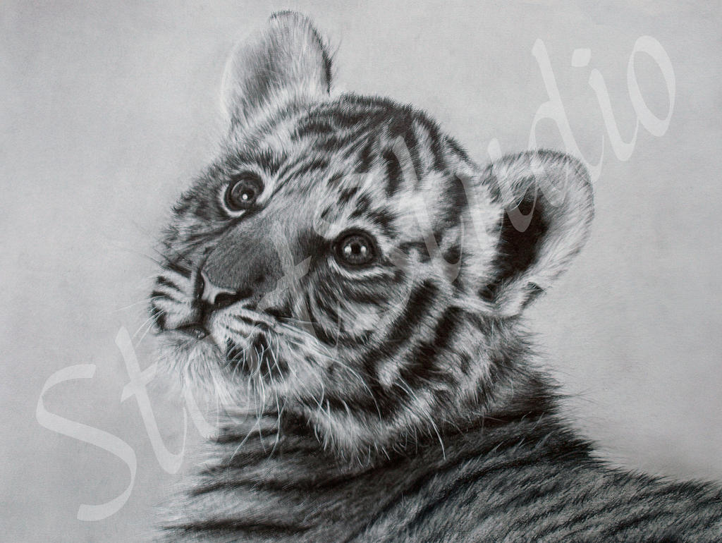 how to draw a realistic tiger cub