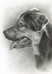 Dog Drawing by JamiePickering