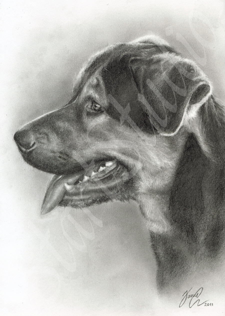 Dog Drawing by JamiePickering