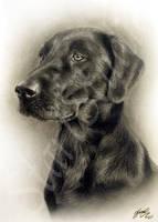 Dog Drawing 2 by JamiePickering