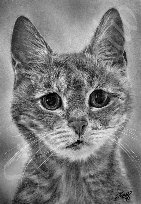 Drawing Of Tabatha by JamiePickering