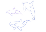 Daily Whales 3 And 4 By Igloo9201-db0dsgy by Igloo9201