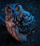 Night owl by lukysta