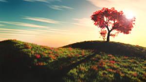 Grassy Hill - (11/Vue - 05/2012)