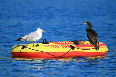 Island Murter (Croatia) by s-ascic