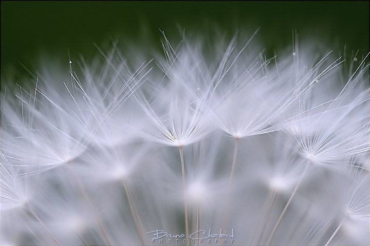 Pure softness by BrunoCHATARD