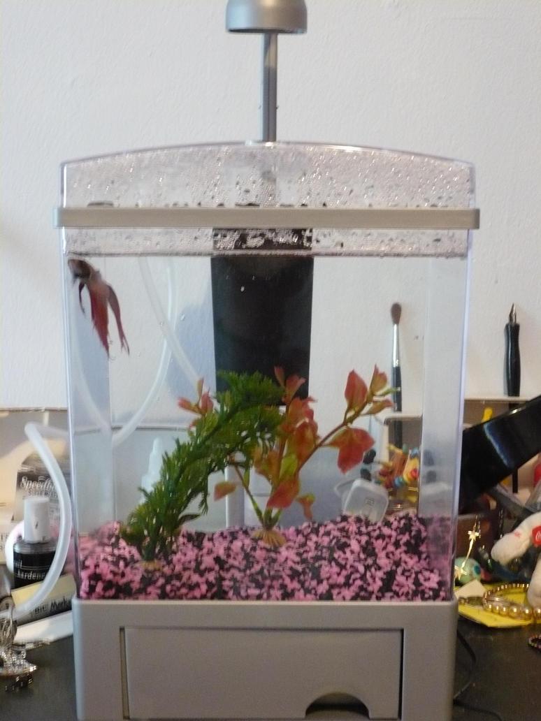 Betta fish new tank by 1bj on deviantart for Fish tank camera