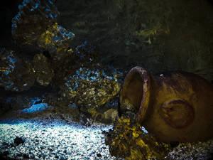 Undersea Still Life